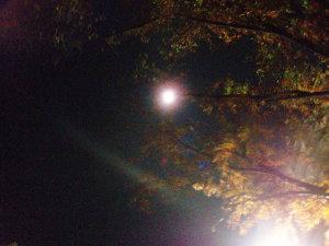 紅葉と月の明かり